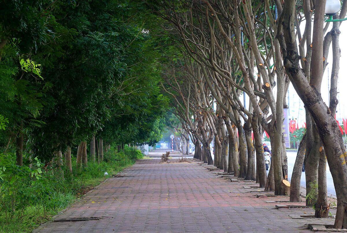 Hình ảnh vỉa hè đường Đoàn Khuê với hàng cây xanh trong lành, mát mẻ.
