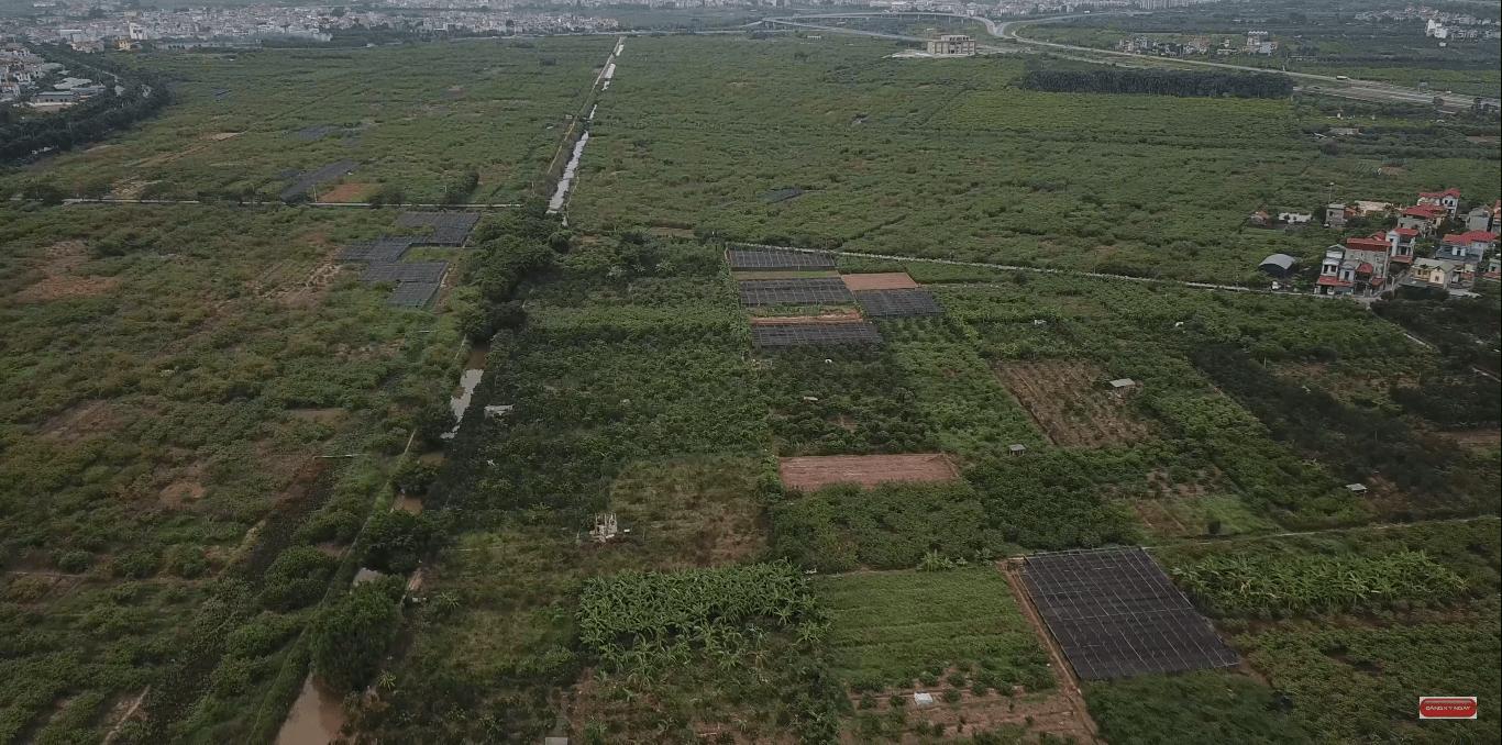 Người dân vẫn trồng cây, phát triển nông nghiệp trên mảnh đất của đại dự án.