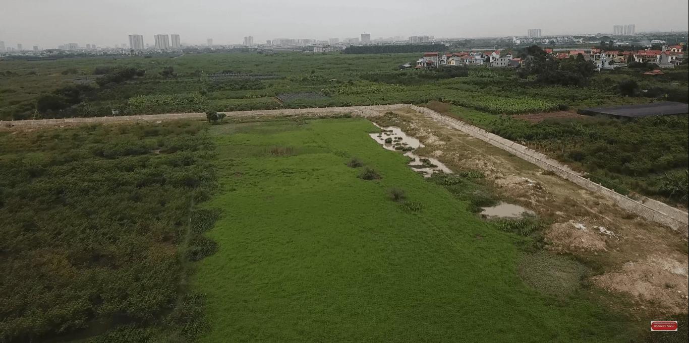 Đồng lúa xanh bao la bát ngát trên mảnh đất sau này triển khai Vinpearl Safari Gia Lâm.