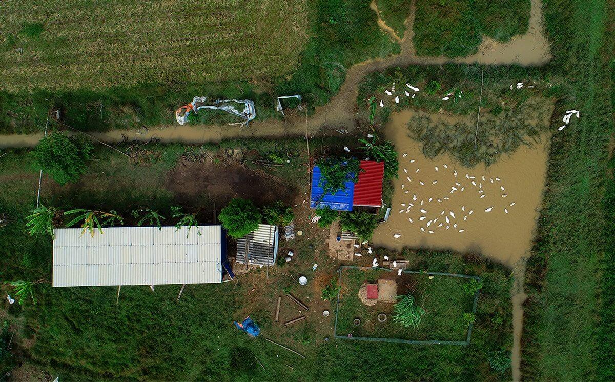 Trang trại này làm tại xã Xuân Dục, nơi đây thời gian tới sẽ phải nhường chỗ cho dự án trường đua ngựa Sóc Sơn.