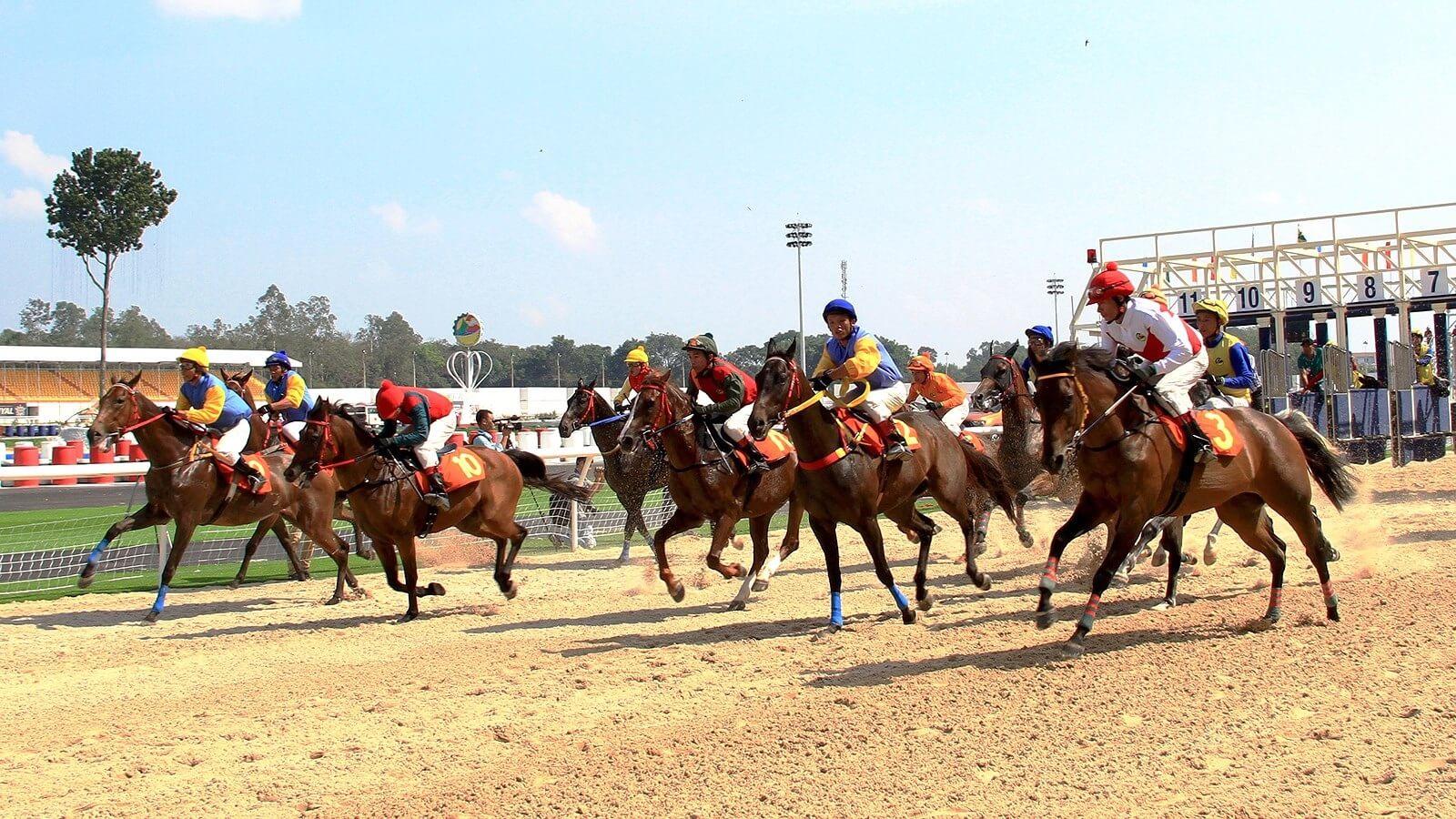 Dự án không chỉ có trường đưa ngựa là còn là tổ hợp quy mô đa chức năng.
